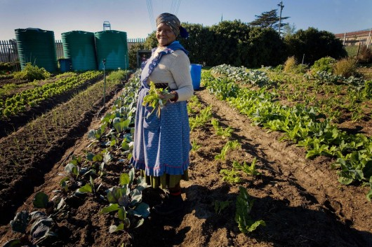 Hydroponic Systems Food Security In Developing Countries