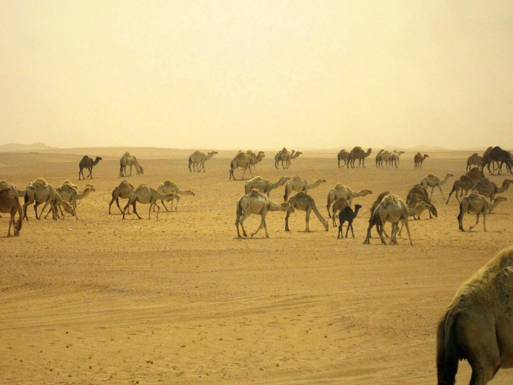 Iraq overpopulation