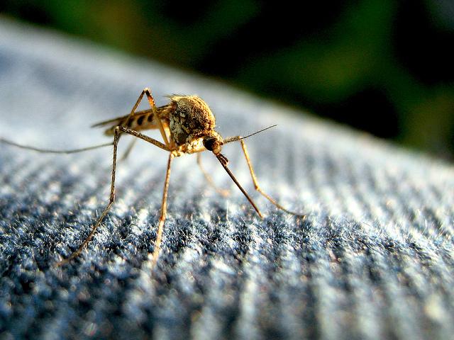 Combating the Zika Virus