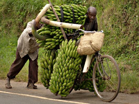 Mozambique Entrepreneurs Change Lives With Bikes