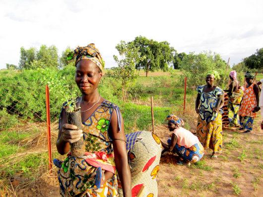 agriculture in Senegal