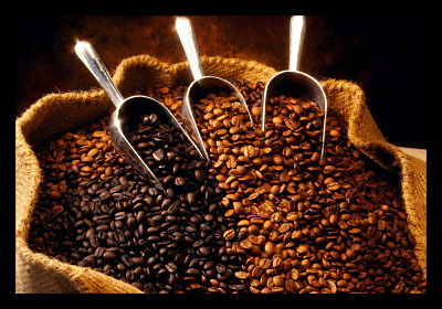 how to grow coffee in uganda
