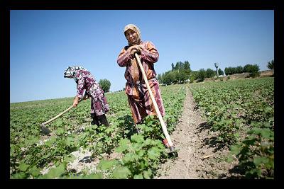 uzbekistan food security