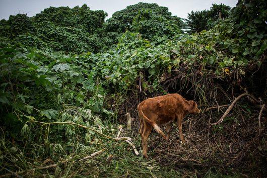 Vanuatu Archives | The Borgen Project