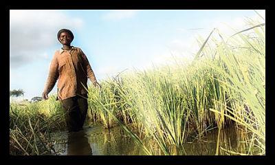 ghana_farmers