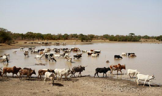 Top Diseases in Burkina Faso