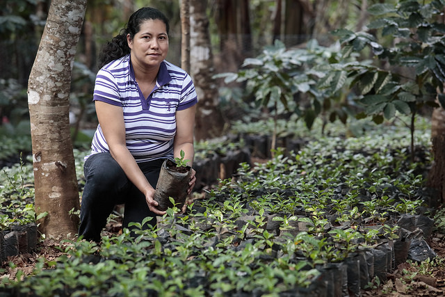 Sustainable Agriculture in Honduras