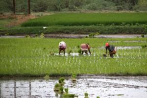 India's ban on dangerous pesticides