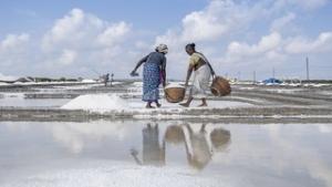 Social Enterprise Helping India's Salt Harvesters