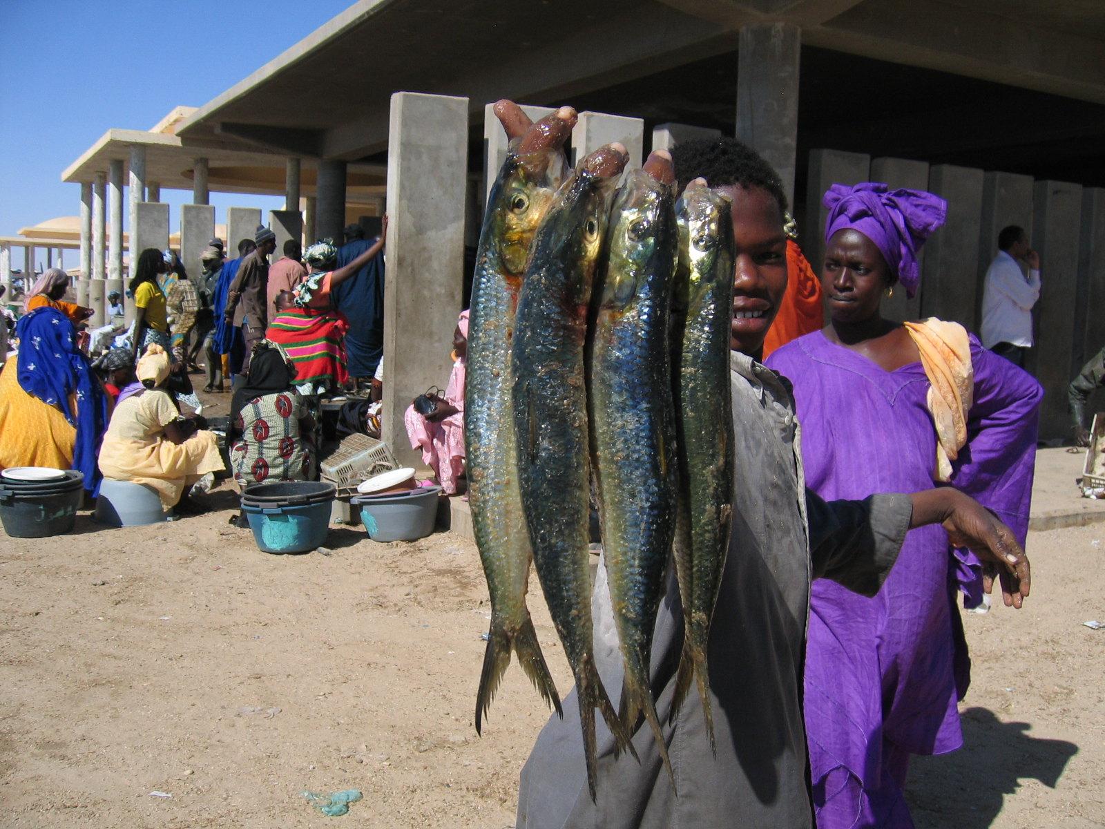 Malnutrition in Mauritania
