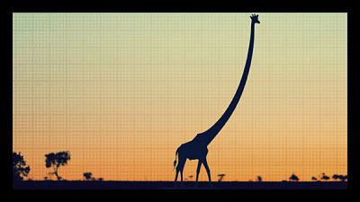 5 Reasons Africa is Improving giraffe_opt