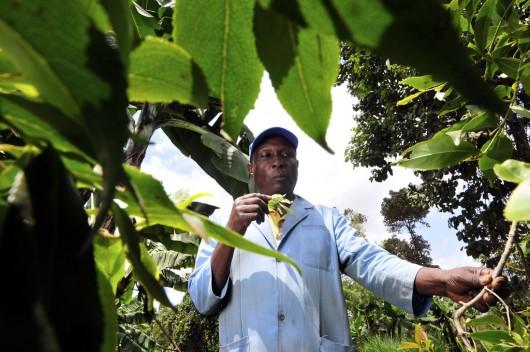 Kenya's Rural Farmers Profiting from Carbon Credits