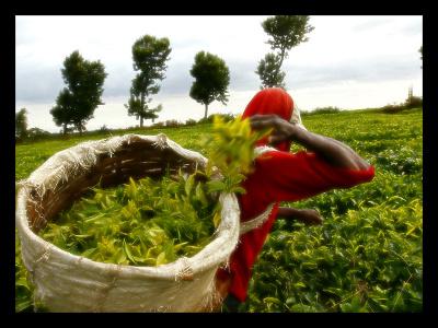 Africa-Kenya-Agricultural-Extension-Development
