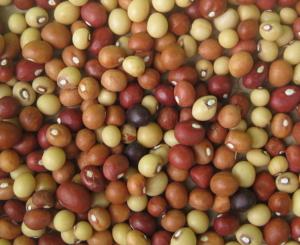 African Crops