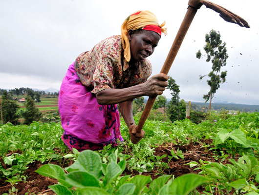 African_Farmers