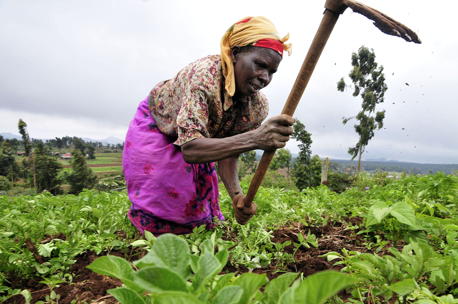 Agricultural Technology in Africa