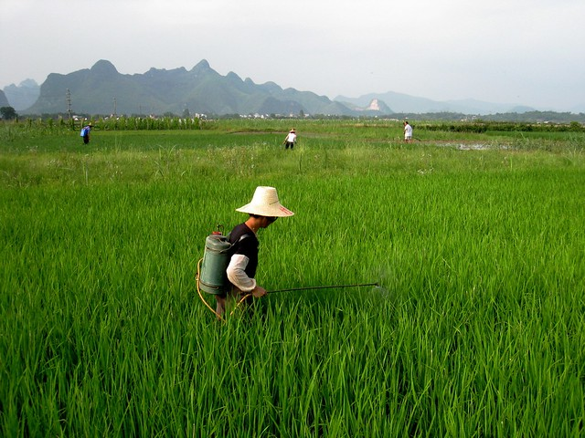 Ecological Approach to Diminish Poverty in China