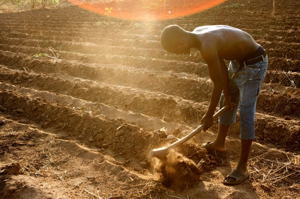 Apps Improving Agriculture in Africa
