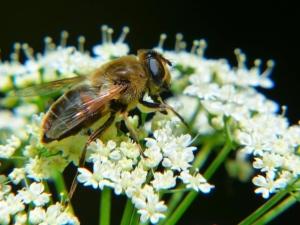 Artificial pollinators