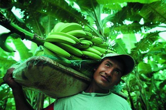 Banana_Farmers