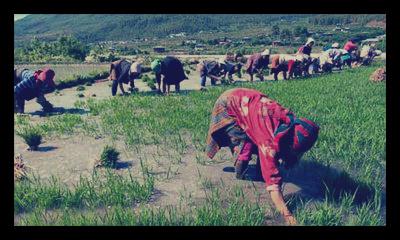 Bhutan_Organic