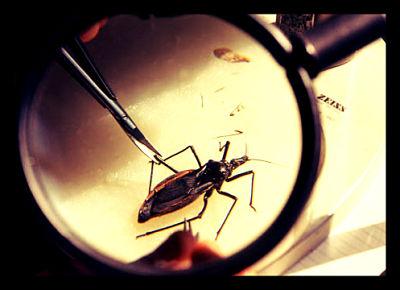 Chagas-Disease-parasite