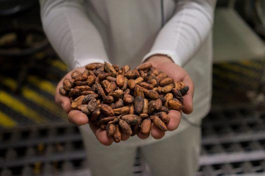 Cocoa Farmers in Latin America
