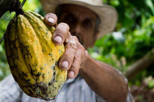 Cocoa Supply Chain
