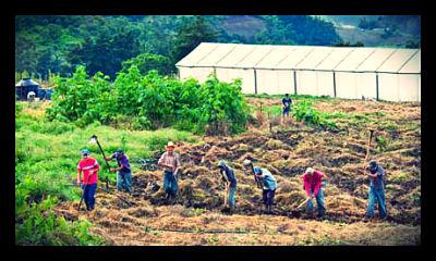 Cooperative Farming Takes Off in El Salvador