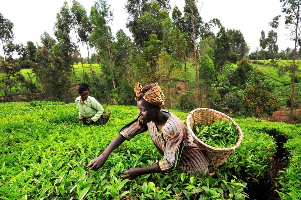 Delivering Food Security to Kenya