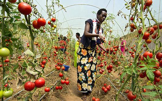 Development Across Africa