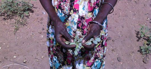 Economy of Senegal