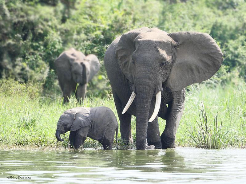 Extreme Poverty on Elephants and Rhinos