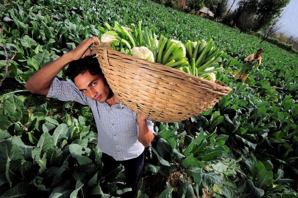Farming Crisis in India