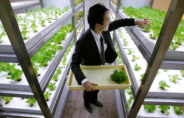 Farming Innovations in Japan