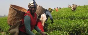 Fieldwork NGOs Fighting Global Poverty