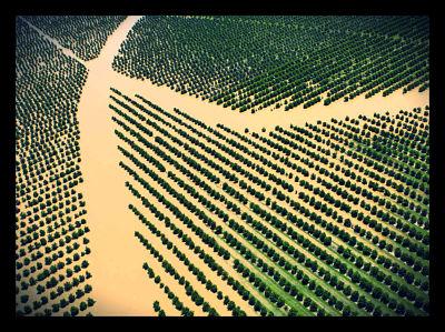 Flood Resistant Grass Hybrid Can Create Food Security