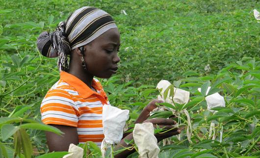 GMOs_in_Nigeria