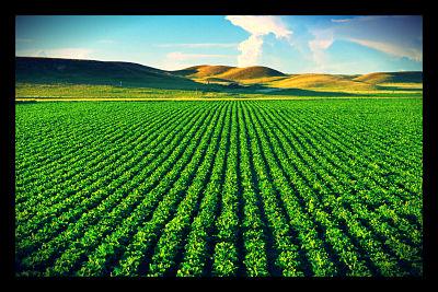GMOs_opt