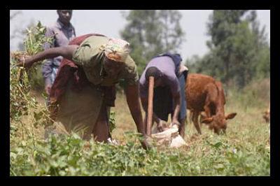Gabon Inequality