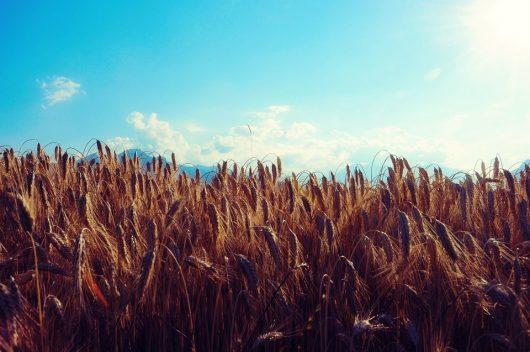 Uganda-Kenya Grain Partnership