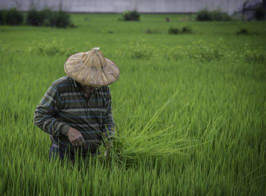 Hunger in Taiwan
