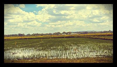 Irrigation_infrastructure