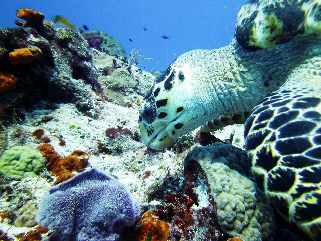 Marine Biodiversity in Mexico