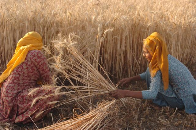 Maximizing Crop Yields
