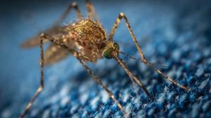 Mosquito-Spread Diseases