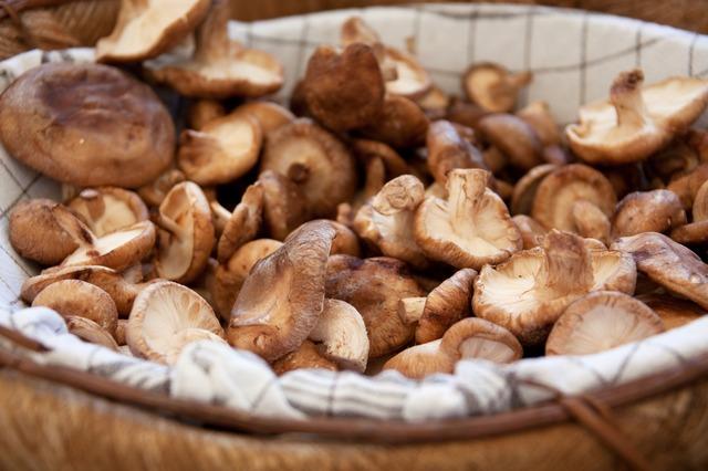 mushroom farming combats poverty