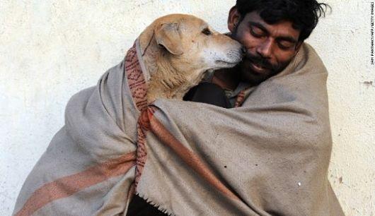 India's_Stray_Dogs