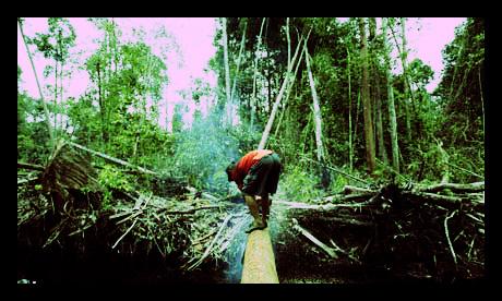 Poverty Causes Deforestation Amazon Slash and Burn
