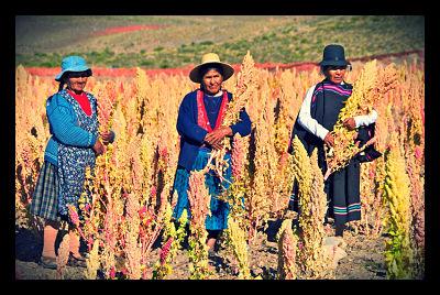 Quinoa farmers_opt